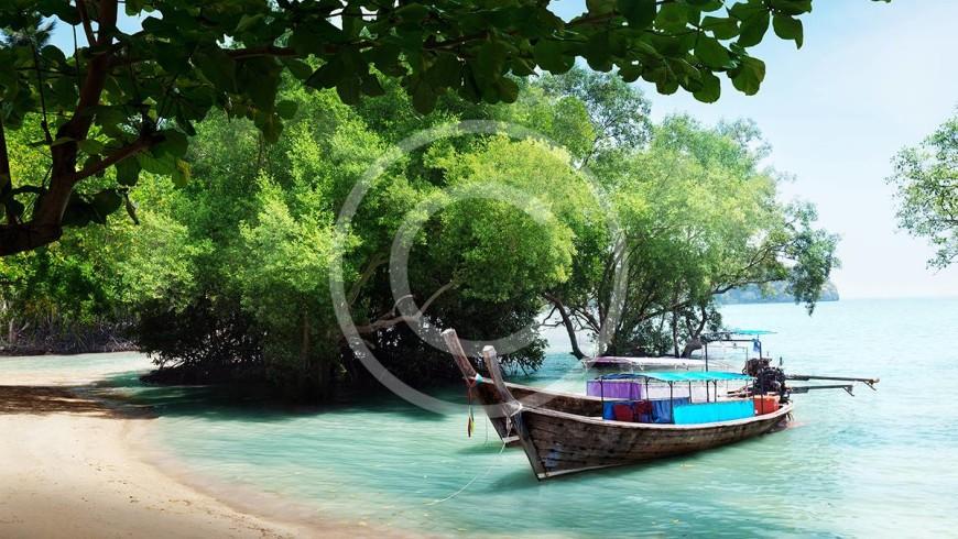 bigstock-tree-in-water-and-long-boats-o-28701590-300x200.jpg