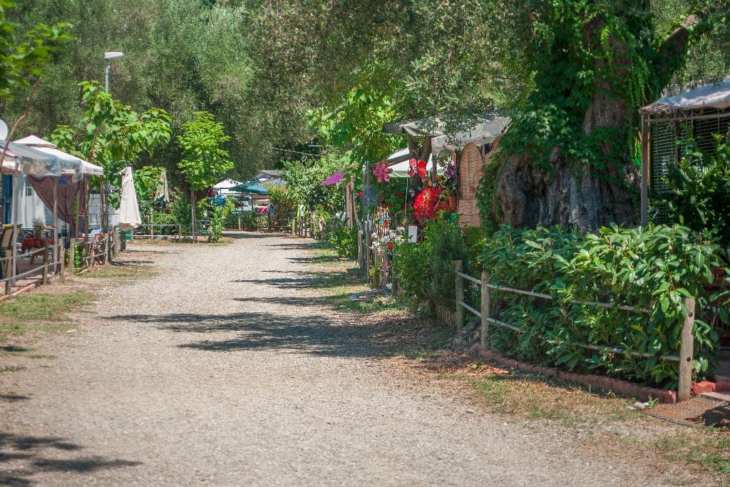 Viale casette all'Europa Unita, lo splendido campeggio-villaggio immerso in un uliveto secolare sulla costa del Cilento (bandiera blu 2016)